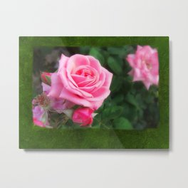 Pink Roses in Anzures 1 Blank P1F0 Metal Print