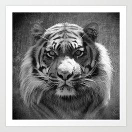 The eye of the tiger II (vintage) Art Print