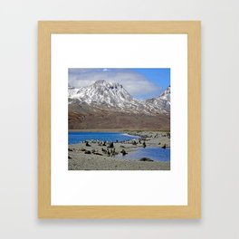 Fur Seals, King Penguins and Snowy Mountains Framed Art Print
