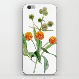 Matico iPhone Skin