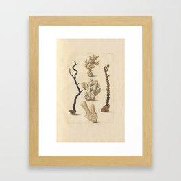 Naturalist Coral Framed Art Print
