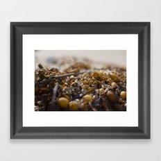 Sea Weed Framed Art Print