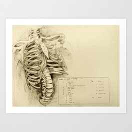 Anatomical Drawing #1 - Bones of the Spine and Thorax Art Print