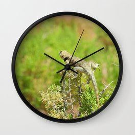 On the Lookout, yellow backed spiny lizard Wall Clock