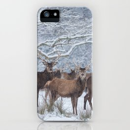 Red deers  from wintry Killarney National Park iPhone Case