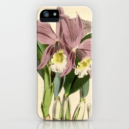 Sophronitis jongheana iPhone Case