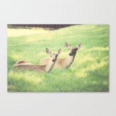Oh, Deer Canvas Print