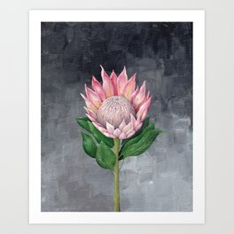 Protea Flower Painting Art Print