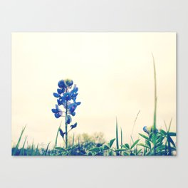 071 | austin Canvas Print