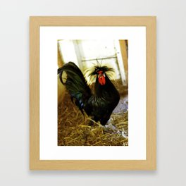 Cock  Framed Art Print