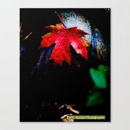 Red leaf Canvas Print