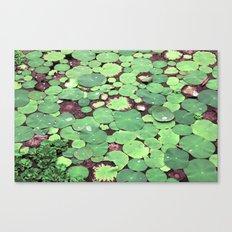 Nymphaeaceae Canvas Print
