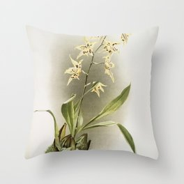 Cypripedium sanderianum from Reichenbachia Orchids (1888-1894) by Frederick Sander (1847-1920) The N Throw Pillow