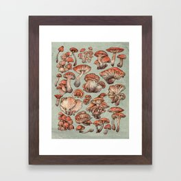 A Series of Mushrooms Framed Art Print
