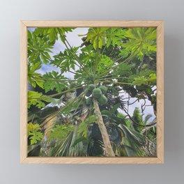 Papaya tree Framed Mini Art Print