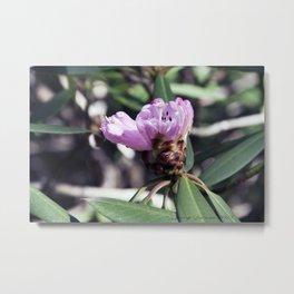 Rhododendren in bloom Metal Print