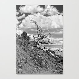 Mt.Baldy_10-01-2011_1116 Canvas Print