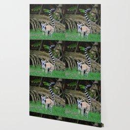 Madagascar's Exotic Ringtail Lemur Wallpaper