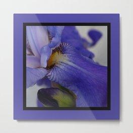 zebra iris 'tongue' (square) Metal Print