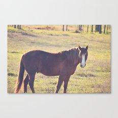 Chesnut Horse Canvas Print