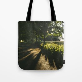 Evening sunlight on a remote treelined country lane. Litcham, Norfolk, UK. Tote Bag