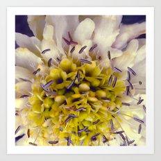 Flower Purple Yellow Art Print