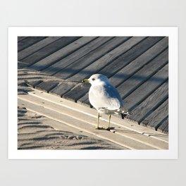 Seagull on wooden boardwalk Art Print