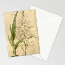 Flower 3538 ornithogalum conicum Pure white flowered Star of Bethlehem1 Stationery Cards