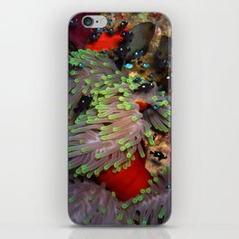Domino Damselfish in Anemone iPhone Skin