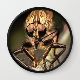 Robber Fly Profile Asildae Close Up Wall Clock
