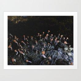 Wildflower Series - Mushrooms Fox Glacier Art Print
