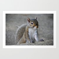 squirrel Art Prints featuring Squirrel by Charlene McCoy