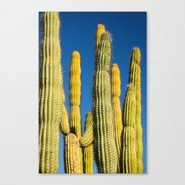 Saguaro Sky Canvas Print