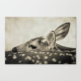 FAWN - Old Friends Collection Canvas Print