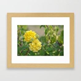 Yellow Mellow Flowers Fine Art Photography Framed Art Print