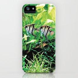 Teardrop Angelfish iPhone Case