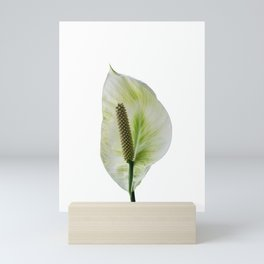Peace Lily on White #1 #floral #decor #art #society6 Mini Art Print