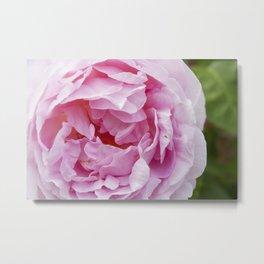 Big Pink Flower Metal Print