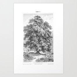 Linden Tree Print from 1800's Encyclopedia Art Print