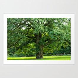 Old green oak Art Print