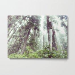 Dreamy Forest Fog Metal Print