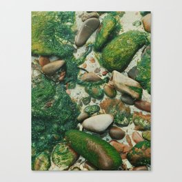 Moss-Covered Rocks in Isle of Skye, Scotland Canvas Print