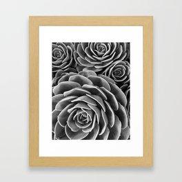 Cactus succulent botanical black and white photo Framed Art Print