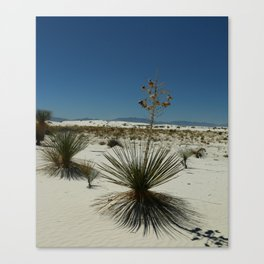 In The Desert Canvas Print
