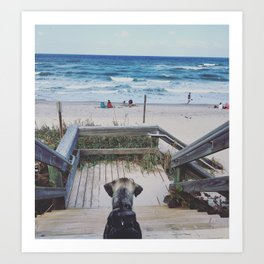 A Dogs Life Art Print