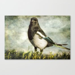 Message from the Magpie Canvas Print