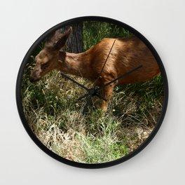 Mule Deer At Zion Park Wall Clock