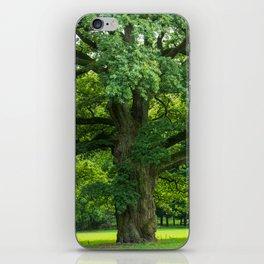 Old green oak iPhone Skin