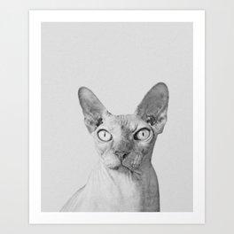 Shynx Cat Art Print