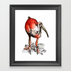 Red bird with feet in the river Framed Art Print